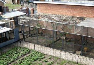 строительство вольера для фазанов