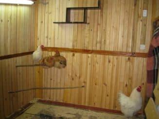 Маленький дом для кур
