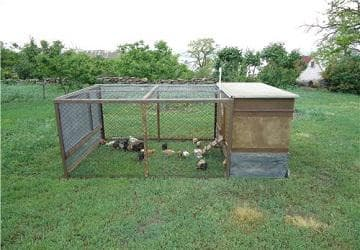как построить вольер для фазанов своими руками
