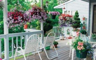 Цветы и растения на веранде в частном доме