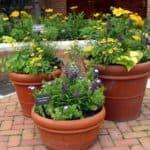 Разнообразие уличных пластиковых вазонов для цветов