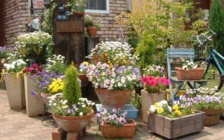 формы и размеры цветников