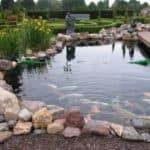 Размеры и монтаж пруд для разведения рыбы на даче