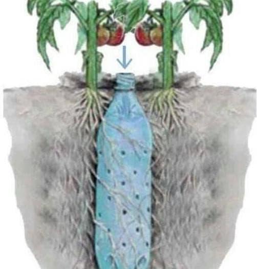 капельный полив из одной пластиковой бутылки