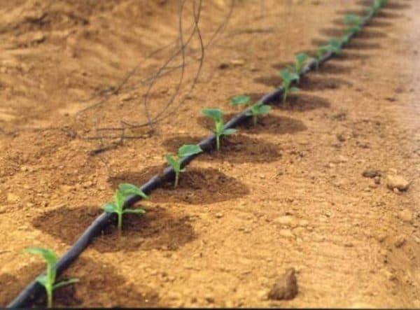 разбрызгиватели для полива огорода капельного типа