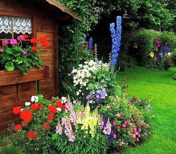 gladiolus v sadu
