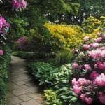 выращивание цветка Альстромерия