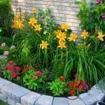 садовая Герань