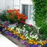 посадка и уход герберы садовой