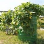 Экономим место с пользой: вертикальные грядки для огурцов