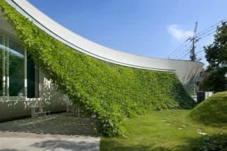 Навесы из зеленых растений