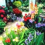 пересадка и уход Орхидеи
