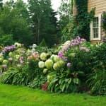 как вырастить бархатцы из семян