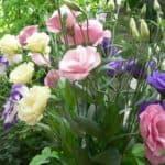 Эустома – выращивание экзотического цветка на вашей грядке