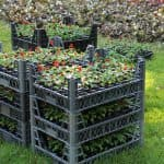 фото неприхотливые многолетние цветы для дачи
