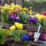 выращивание Настурции из семян рассадой
