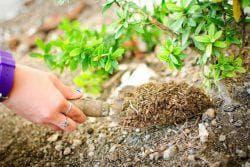 подготовка почвы под цветы