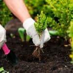 Как красиво посадить цветы на даче: варианты