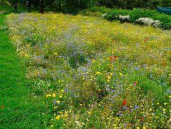 разнообразный мавританский газон