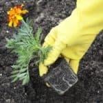 быстрорастущие растения для живой изгороди
