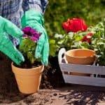 как садить люпин семенами