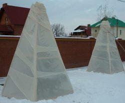 укрытие на зиму подсолнуха декоративного