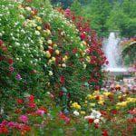 посадка садового Бальзамина