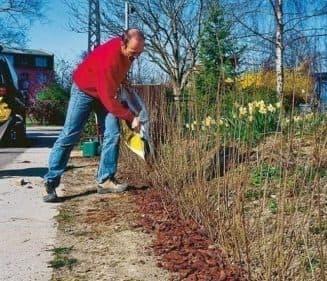 как посадить живую изгородь из пузыреплодника