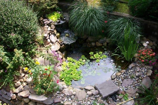 оформление водоёма на маленьком участке