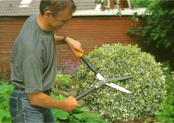 садовые ножницы для стрижки кустов