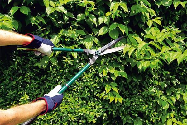 кустарниковые садовые ножницы для стрижки кустов