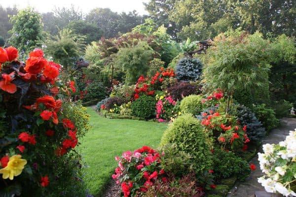 розы в пейзажном стиле